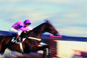 UK Racing Lays Review
